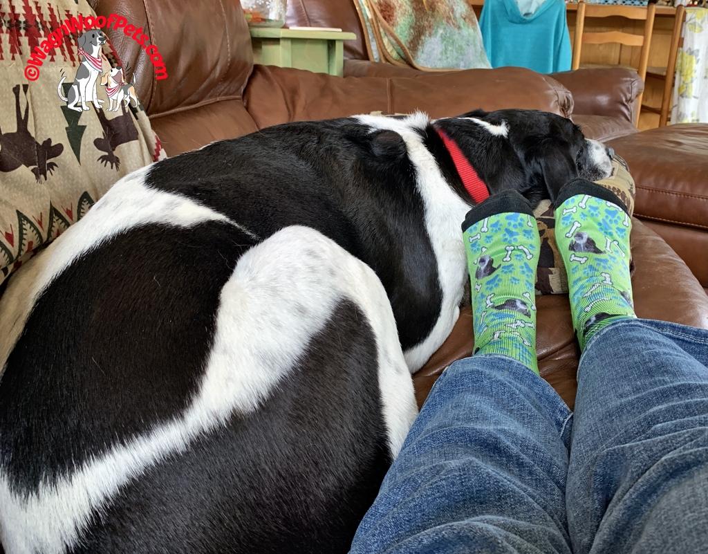 Fun Dog Socks