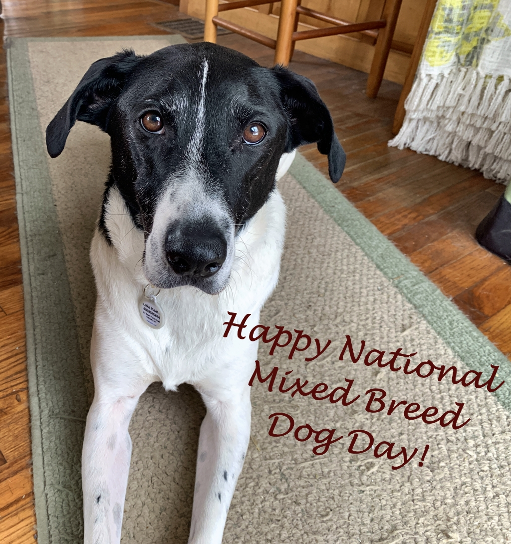 Happy National Mixed Breed Dog Day!