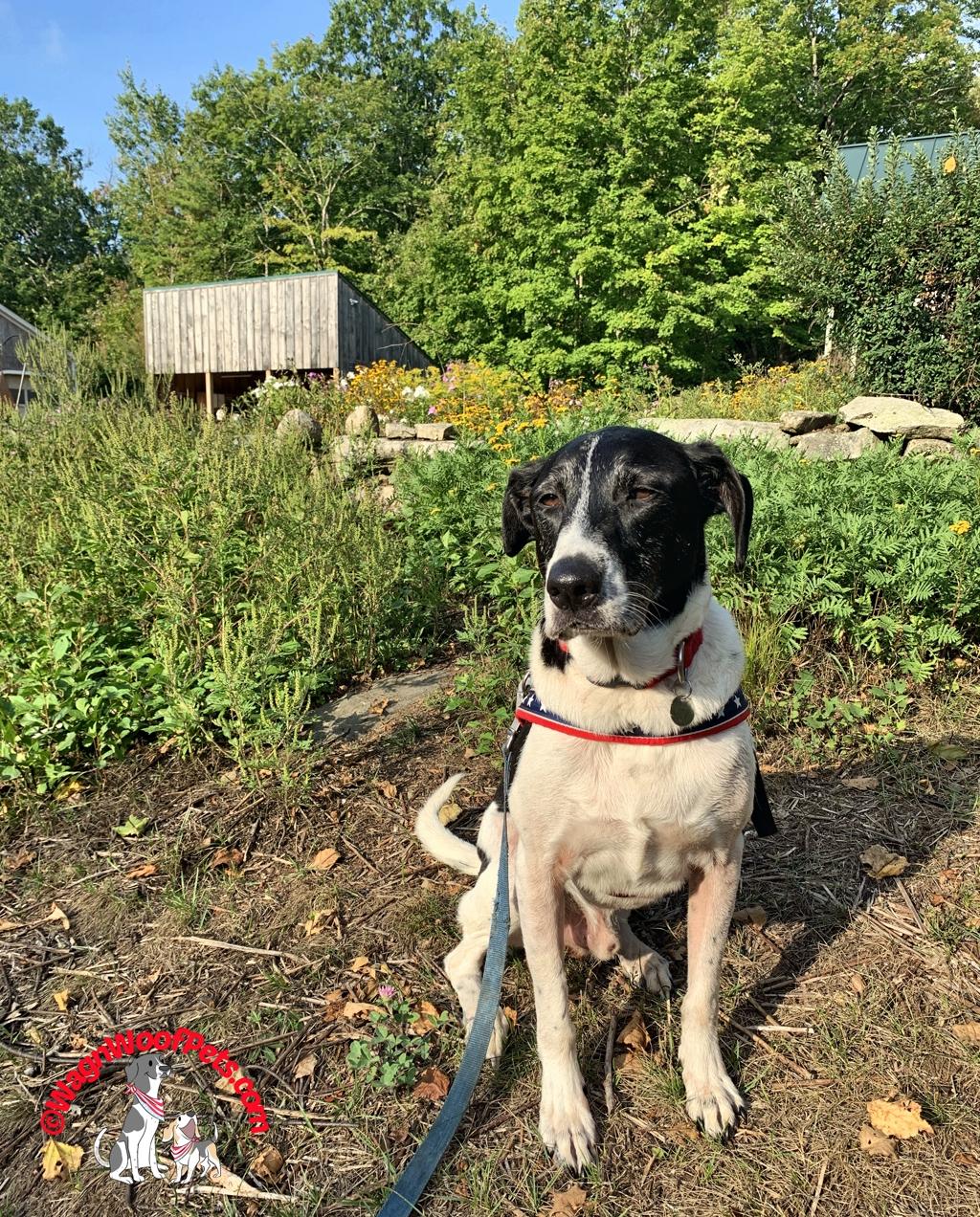 Farm Dog Luke