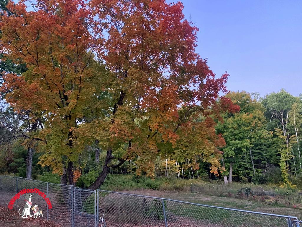 Autumn Foliage in NH