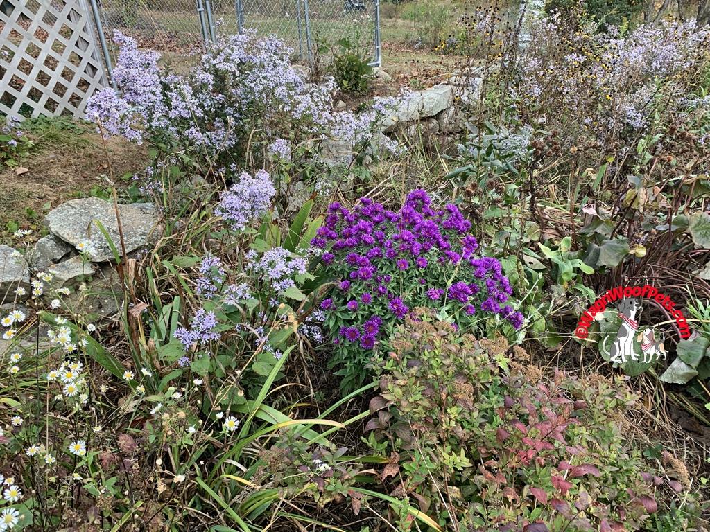 Autumn Farm Flowers