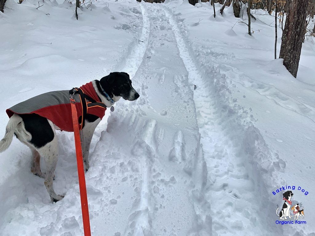Dog Trails in the Snow