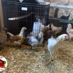 Farm Newbies