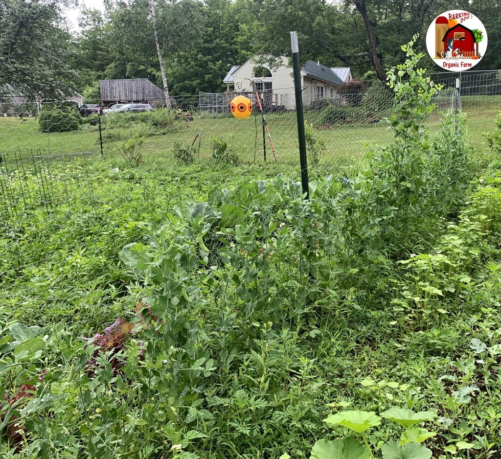 Farm Vegetable Garden